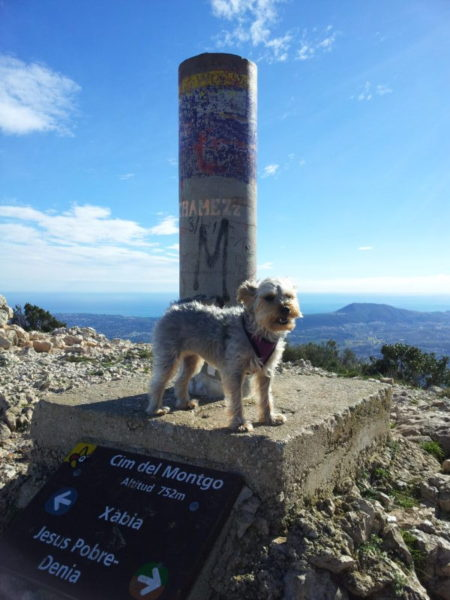 Jane's Izzy dog Montgo mountain summit Javea