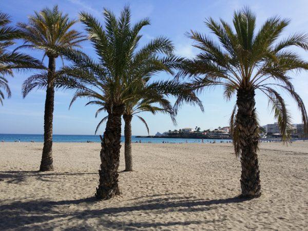 Beach and palms.