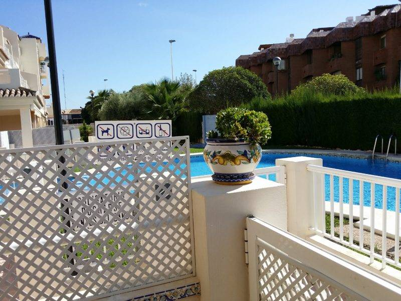 Swimming pool, blue, plant pot and plant, white gate and fence
